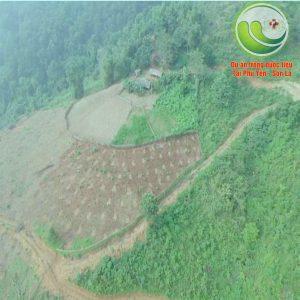 Vùng trồng dược liệu tại Sơn La