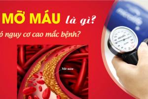 Bệnh mỡ máu: nguyên nhân, triệu chứng & điều trị đông y